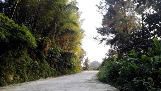 特色乡村旅游 绿树村边合 青山郭外斜